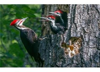 Elektrikli çekiç tasarımında ağaçkakanlar model alınıyor