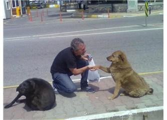 Köpekçi Sami