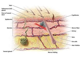 Epidermolysis Bullosa - EB Hastalığı nedir ?