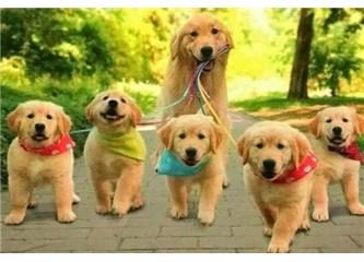 4 Ekim Dünya Hayvan Hakları Koruma Günü'nde bir soru... Hayvanlar sizin gerçekten dostunuz mu? Yoksa