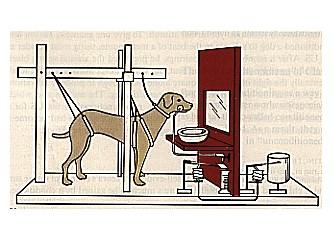 Pavlov'un köpeği ya da maymunlardan ne farkımız vardır bizim