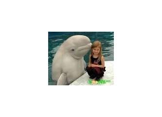 Yunus Balığı gibi kim olabilir ?