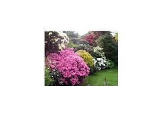 Rengarenk çiçekler dünyamızı süslüyor