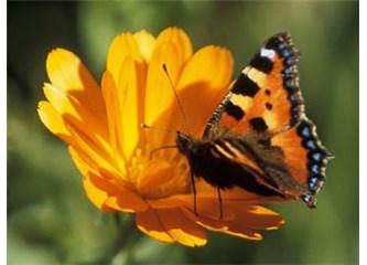 Kelebek hikayesi
