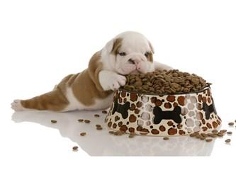 Köpeğinize uygun mama seçmenin püf noktaları