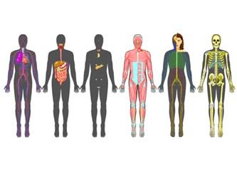 Sağlıklı bir beden için Thetahealing ile iyileşin