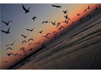 Bir Kuran mucizesi paylaşalım: Hayvanların topluluk olması Kuran'da bildiriliyor mu?