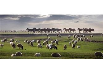 Atlar ve Koyunlar, Siyasetçiler ve Çobanlar