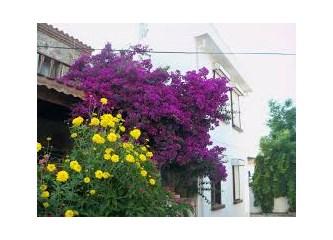 Tenedos'da helal aşk ve şarap