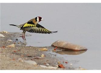 Saka kuşunun ilkbaharları