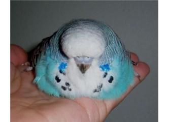 Tonton kuş, felçli Maviş'imiz ( Allah cc, ''Onlar benim sessiz ümmetlerimdir'')