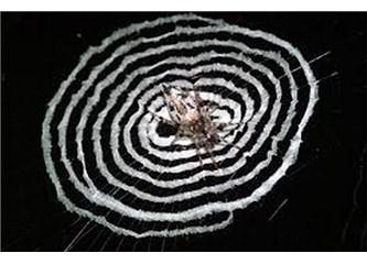 Kendi maketini yapan örümcek!