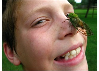 Sayı saymayı bilen ağustos böcekleri!