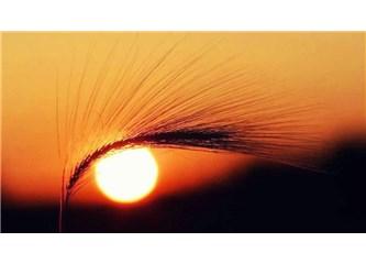 Hasat zamanı; Başak Burcunda Güneş tutulması & Burçlar...