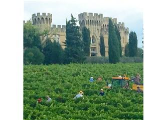 Şarabın kalbine yolculuk: Provence