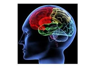 Beyin haritası, duyu alanları ve ilişkiler