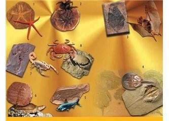 Bin yıldan daha eski iskelet kemikleri Mehdi ile konuşacak…