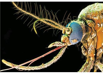 Küçücük bir sivrisinek neden tesadüf eseri var olamaz?