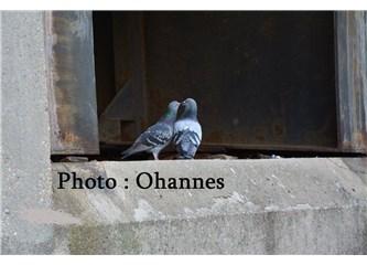 Güvercinlerin aşkı.