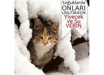 Sokağınızdaki hayvanlar için 5 kış hazırlığı