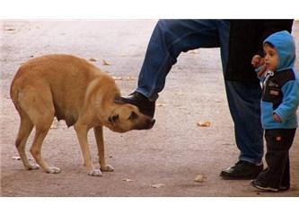 Hayvanları sevmeyen insanları da sevmez