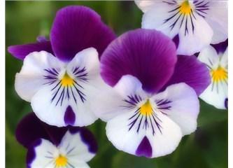 Haiku. B7. Çiçek