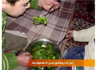 Suriye'nin Medaya kasabasında insanlar açlıktan ölmemek için kedileri ve otları yiyorlar!