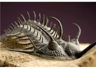 530 milyon yıl önce yaşamış harika canlılar evrimi yalanlıyor!