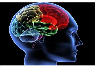 Müthiş özelliklerle yaratılan bir organ: Beyin