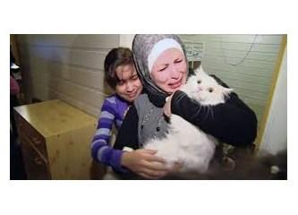 """Suriyeli mülteci kedi """"Kunkuş""""un hikayesi, Aylan bebek ve ibretlik halimiz..."""