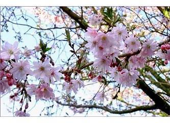 """Bahar geliyor bahar... """"Baharla gelen aşk'lara"""" hazır mısınız?"""