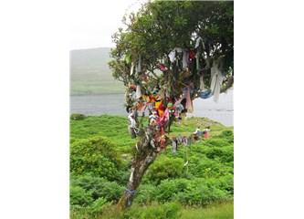 Çaput ağacı