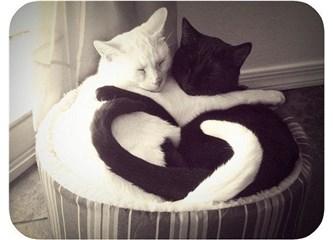 Sevmek denilince