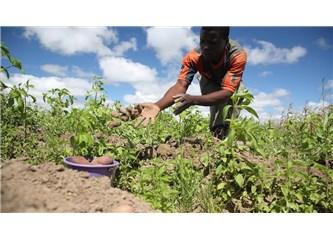 Afrika tarımına iklim direnci uygulamalarının sunduğu fırsatlar