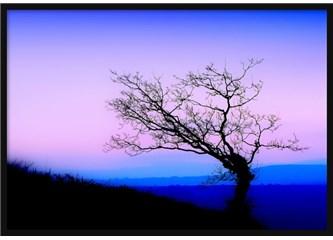 Süzme sözcükler 311: (Haiku) Sanal mutluluk