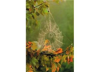 Düşünen Örümcek düşünmeyen İnsan