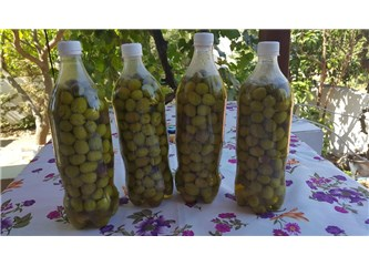 Tuzsuz Yeşil zeytin yapımı(Kırma zeytin)