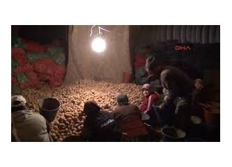 Patates oyunları 2 (tüccar bakışı)