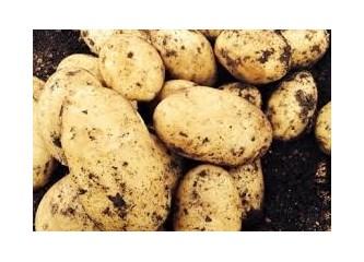Patates oyunları 4 (Tohumcu bakışı)