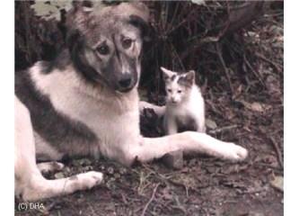Hayvanlara yapılan yardımlar üzerine