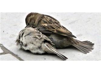 *Kırdık mı kanadını serçenin...
