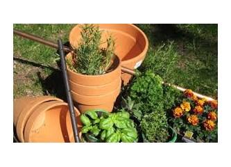 evdeki malzemelerle nasıl bitki bakılır.
