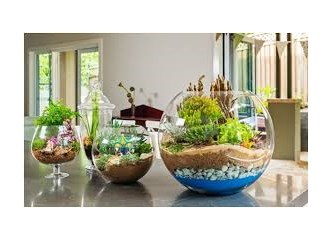 Bizi hayallere daldıran 'terrarium-minyatür bahçeler'