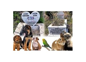 Sevdiğimiz kedimiz köpeğimiz için de cenaze töreni düzenleyebiliriz