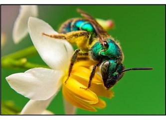 Sadece küçücük bir arıyı düşünmek bile insanın iman etmesine yeter...