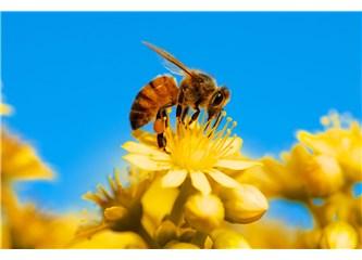 Küçücük bir arı tesadüf eseri bütün bunları nasıl yapar?