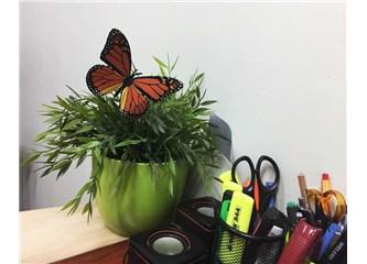 Mucizevi kanatlar... kral kelebekler...
