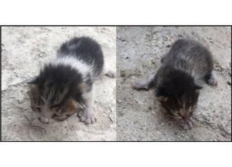 Üç minik kedi yavrusunun maceralı yolculuğu!