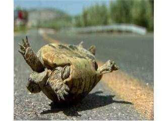 Haritasız arazide ters dönmüş Kaplumbağa olmak