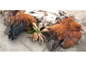 Arsız,ayarsız ve acımasızlar hayvanlara eziyet etmeye devam ediyorlar